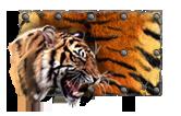 Краска Тигр Танки Онлайн